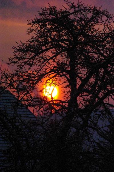 Sonnenaufgang mit Baum