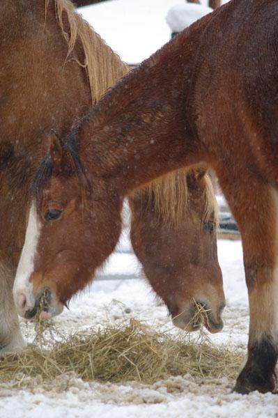 pferdekoepfe